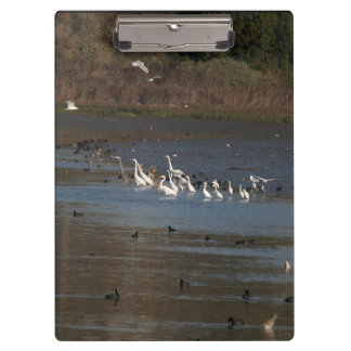 Wetlands Birds Wildlife Animals Refuge Clipboard