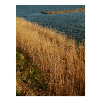 Wetlands, Essex, England - Postcard