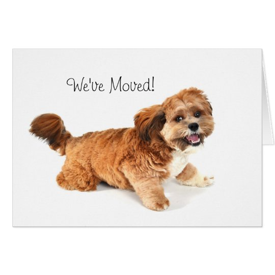 We've Moved! Cards Featuring Cute Dogs