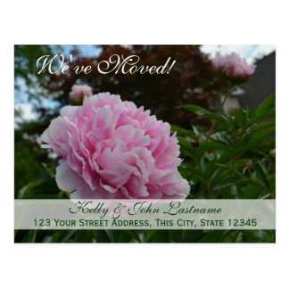 We've Moved Peony Garden Postcard