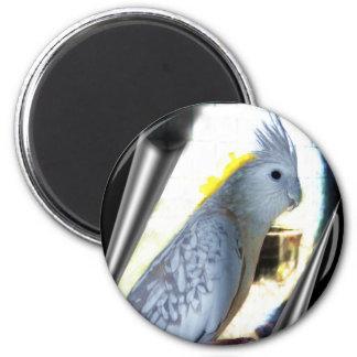 WF tiel Magnets