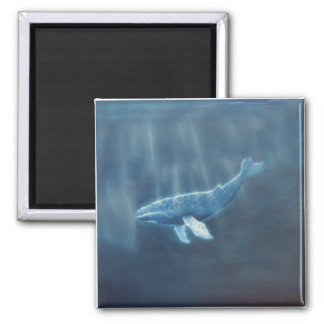 Whale Below Square Magnet