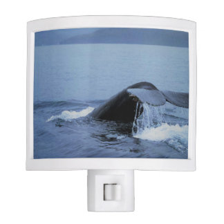 Whale Night Light