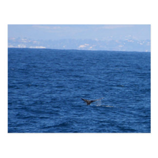 Whale Seen From One Of The Whale Tour Boats In San Postcard