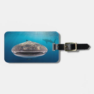 Whale Shark, Front view, Indonesia Luggage Tag