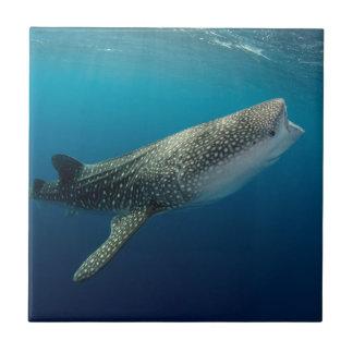 Whale Shark Swimming Tile