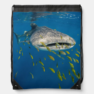 Whale Shark with fish, Indonesia Drawstring Bag