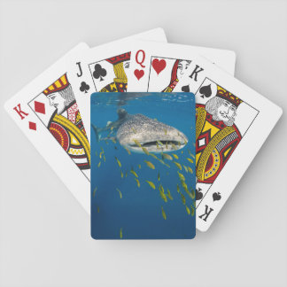 Whale Shark with fish, Indonesia Playing Cards