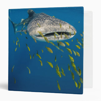 Whale Shark with fish, Indonesia Vinyl Binders