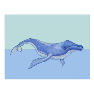 Whale solo Postcard
