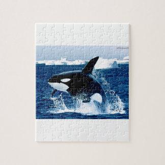 Whale Splash Puzzle