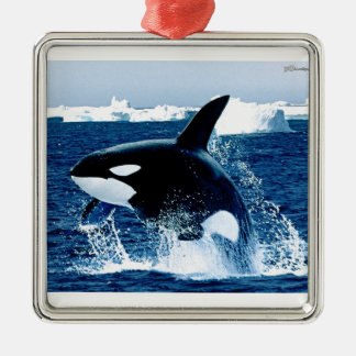 Whale Splash Silver-Colored Square Ornament
