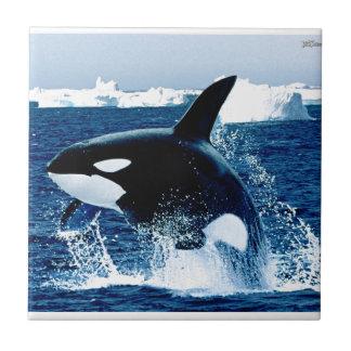 Whale Splash Tile