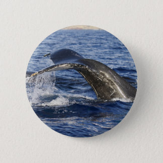 Whale Tail 2 Inch Round Button