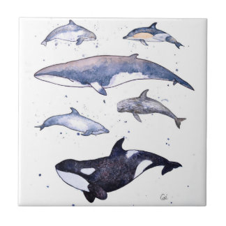Whales and Dolphins of Scotland Tile