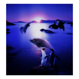 Whales dolphins penguins ocean sunset poster