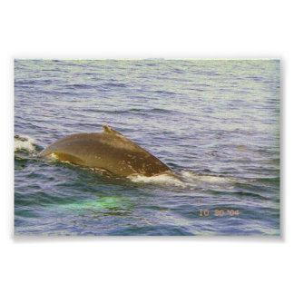 Whale's humpback poster