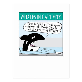 Whales In Captivity card by Graham Harrop Postcard