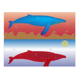 Whales Postcard