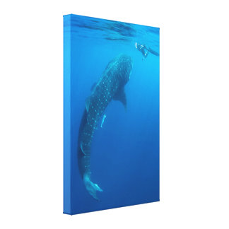Whaleshark and Snorkeler Photo Canvas