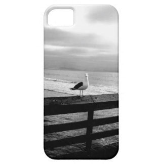 What are you looking at? iPhone 5 covers