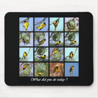 What did you do today - bird and nests mouse pad