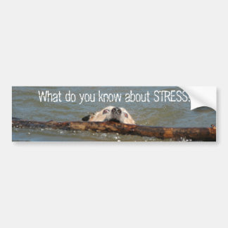What do you know about STRESS? Bumper Sticker