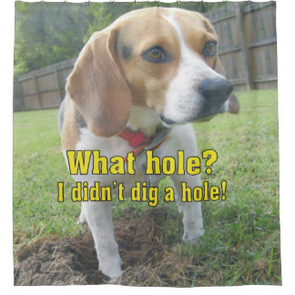 What hole? I didn't dig a hole! Beagle