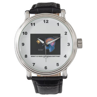 What Is Your Circadian Rhythm? Watches