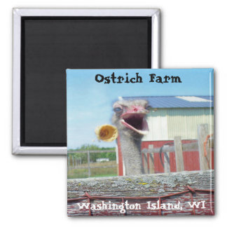 What No Ice Cream - Ostrich Farm Square Magnet