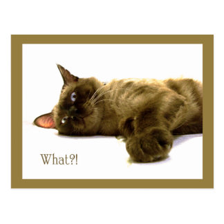 What?! Postcard