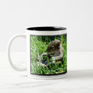 What You Drink Buddha Squirrel Mug