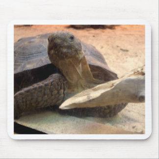 Whatcha doin'? Friendly Tortoise Designer Stuff Mouse Pad