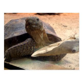 Whatcha doin'? Friendly Tortoise Designer Stuff Postcard