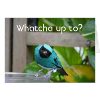 Whatcha up to? card