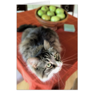 What's a Still Life? Siberian Cat Note Cards
