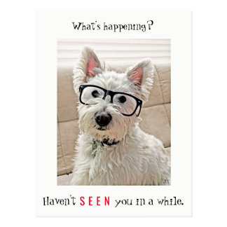 What's Happening, Westie Dog Wearing Glasses Postcard