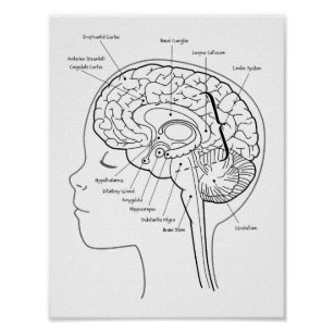 This Is Your Brain Art & Wall Décor | Zazzle.ca