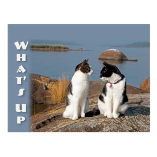 What's up CC0553 Cat conversation Postcard