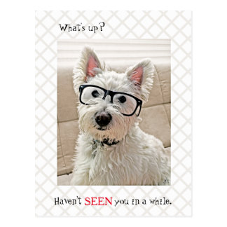 What's Up, Haven't Seen You, Dog Wearing Glasses Postcard