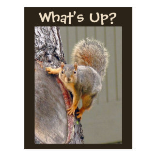 What's Up? Squirrel Photo Postcard