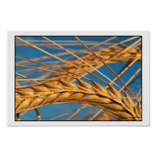 Wheat 2 poster