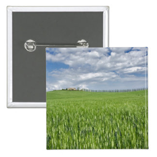 Wheat field and drive lined by stately cypress pinback buttons