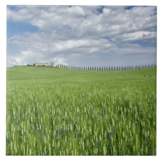 Wheat field and drive lined by stately cypress ceramic tiles
