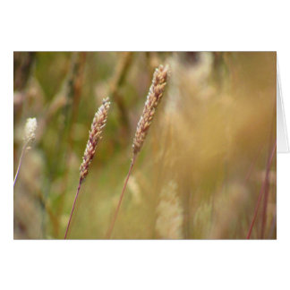 Wheat Field Blur Card