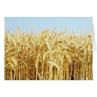 Wheat Field Card