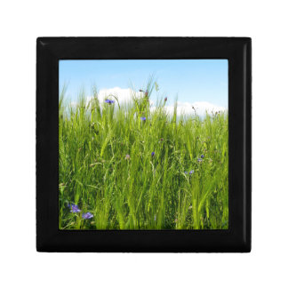 Wheat field in spring / Weizenfeld Jewelry Boxes