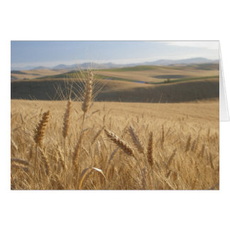 Wheat fields card