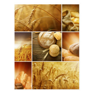 Wheat.Harvest concepts.Cereal collage Postcard