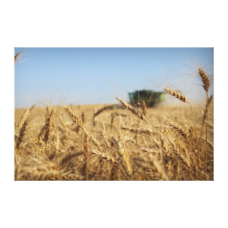Wheat Harvest Green Combine Canvas Print
